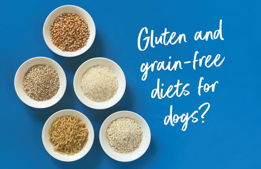gluten-free dog food