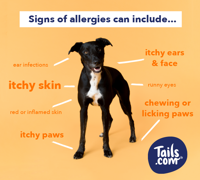 Does My Dog Have A Food Allergy The Inside Scoop