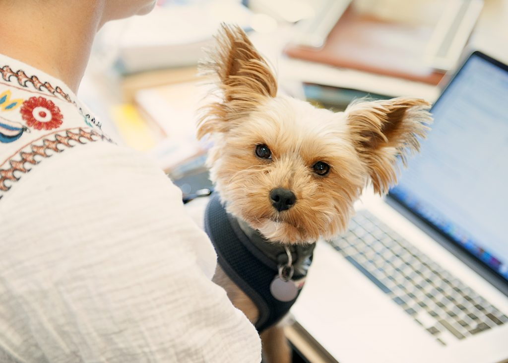 Biggie - Bring Your Dog To Work Day