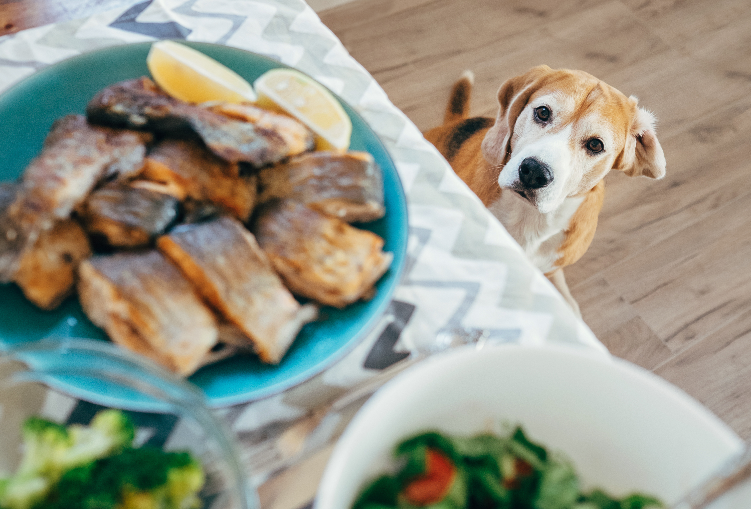 Can Dogs Eat Fish And Seafood The Inside Scoop