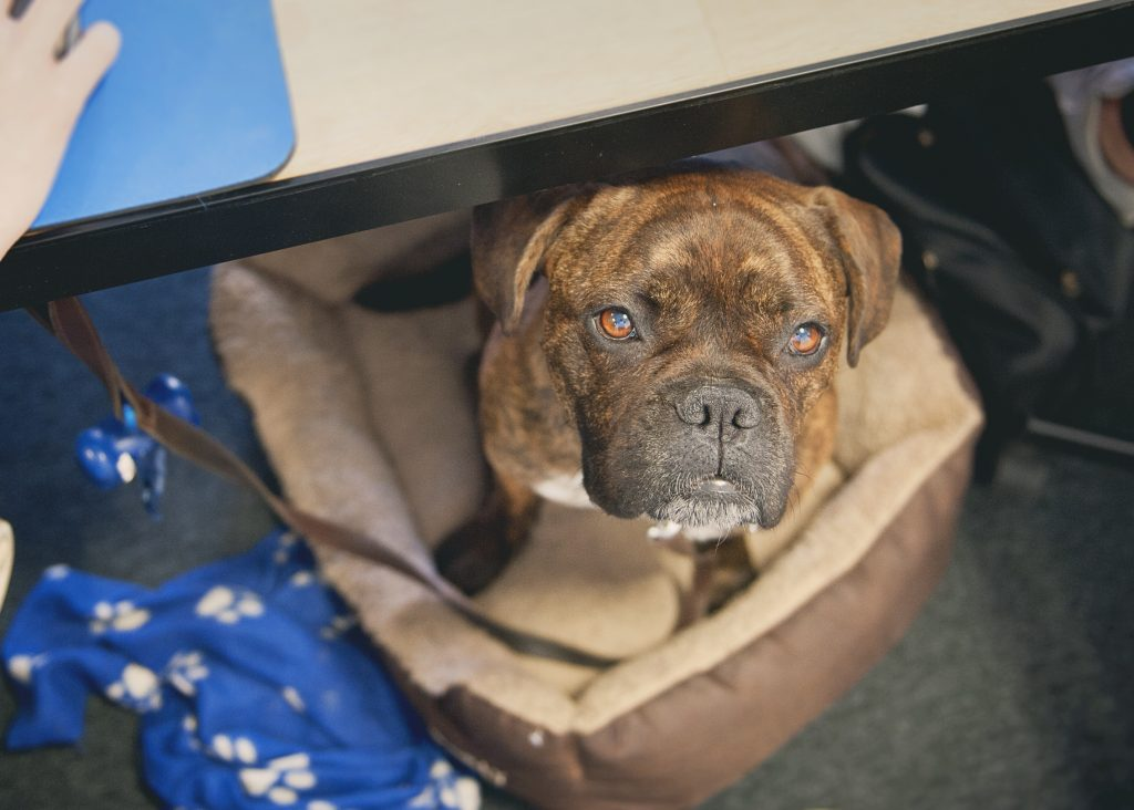 Ruby - Bring Your Dog To Work Day