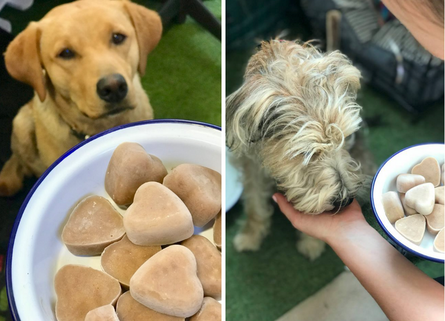 dogs enjoying homemade frozen treats