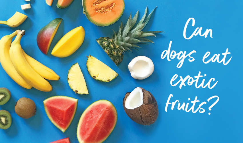 can dogs eat exotic fruits