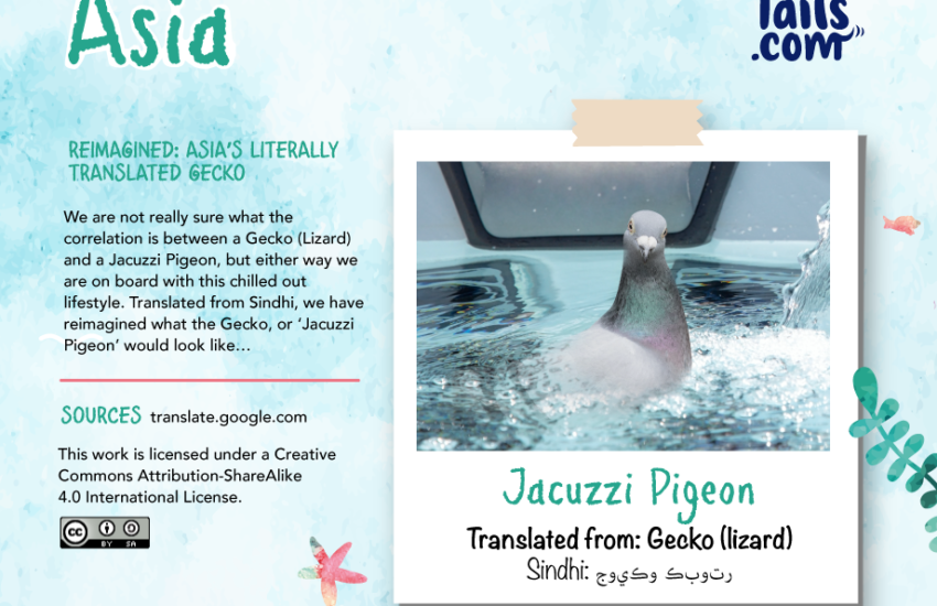 pigeon in a jacuzzi