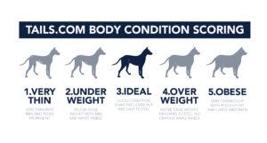 Dog body condition