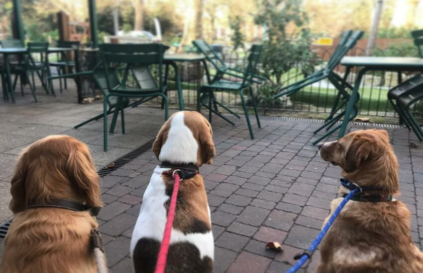 Dog friendly restaurant: Putt in the Park